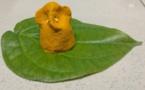 Pourquoi le curcuma (Pasupu) est-il considéré comme saint en Inde et à quoi sert-il ?