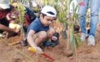 Record battu pour l'Inde : 66 millions d'arbres plantés en 12 heures !