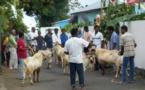 Les sacrifices d'animaux : pour ou contre ?
