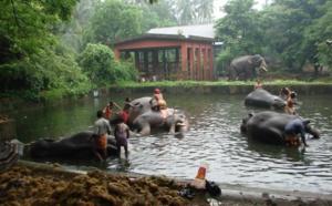 REFUGE POUR ELEPHANT DANS LES TEMPLES HINDOUS DU KERALA : ANAKOTTIL